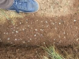 Lawn Grubs Removal